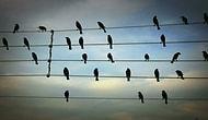 Elektrik Tellerindeki Kuşların Pozisyonlarından Yararlanılarak Yapılan Beste