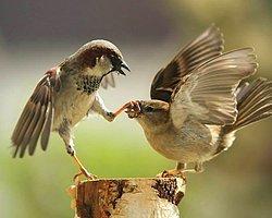 8 Numaralı HATA: Çok Hızlı Konuşun