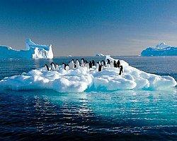 'Eriyen Buzullar Tokyo ve Newyork'u Batıracak'