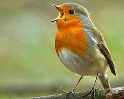 Elektrikli Aletler Kuşların Yön Duygularını Etkiliyormuş
