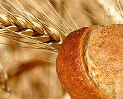 Ekmeğimiz Tehlikede...