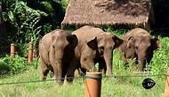 Aynadaki filler: Bir zihin teorisi
