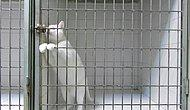 Kedice Prison Break