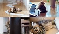 Kedi Yavrusunun Dünyanın En Şirin Hayvanı Olduğunun 25 Kanıtı