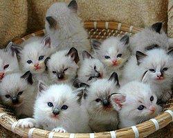 Kedi yavruları, hareketleri tavırları her türlü şirinlikleri ile hayatımıza güzellikler katıyor. işte bazıları..