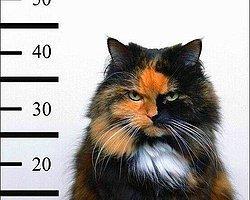 Meğer Trafoya Kedi Girmemiş