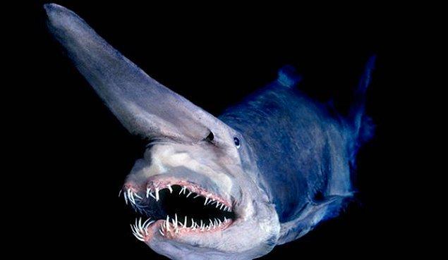25. Gulyabani Köpekbalığı