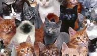 Kedileri Anlamanın 17 Yolu