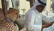 Yalnızca Dubai'de Karşılaşabileceğiniz 22 Manzara