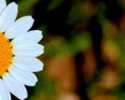 Çiçek Fotoğrafı Nasıl Çekilir ?