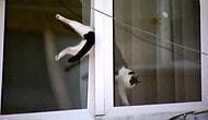 Her yere sığabileceğini ispatlayan 17 kedi.