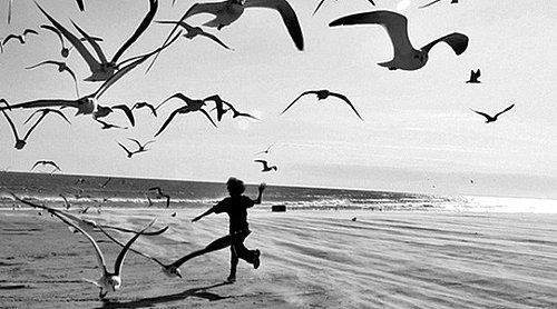 Kuşlardan Ilham Alan 22 şiir Dizesi Onediocom