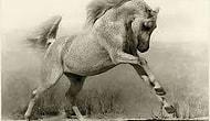 Atlardan İlham Alan 17 Dize