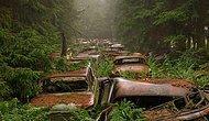 """Dünyanın En Eski Araba Mezarlığından, """"Doğa""""nın Makineye Karşı Zaferi"""
