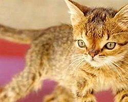 Down Sendromlu Kedi Otto'nun Kalbi Dayanamadı