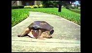 İşinden Dönen Bakaya Kaplumbağa A.K.A 800000 GBT ile aranıyor.