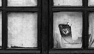 Sahibinin Yolunu Gözleyen 30 Masum Kedi