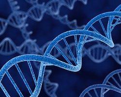DNA'nın Yüzde 92′si İşe Yaramıyormuş...