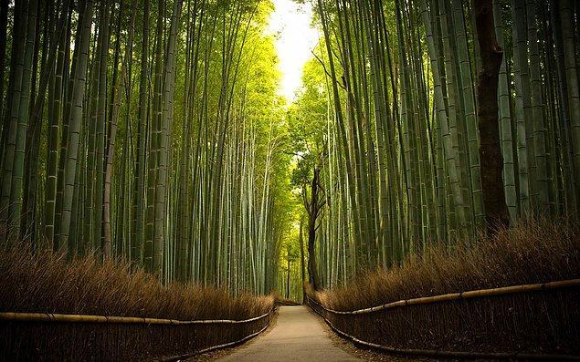 Dünyada en hızlı büyüyen bitki bambu, günde 90 cm büyür.