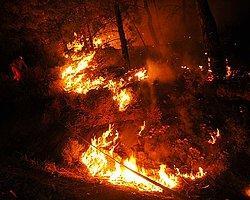 Muğla'da Şüphelendiren Orman Yangını