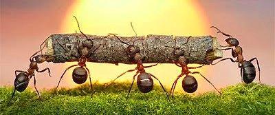 Karıncanın boyundan büyük bir taneyi taşımaya çalışmasını seyretmek..