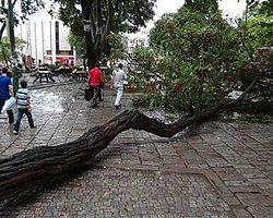 Beyazıt Meydanı'nda Ağaç Devrildi: 2 Ağır Yaralı
