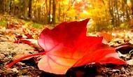 Sonbaharın Yaklaşmakta Olduğunun 16 Belirtisi