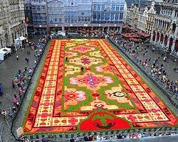 Brüksel'in dünyaca ünlü meydanı Grand Place, 600 bin begonya çiçeği ile süslendi