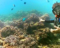 Mercan Kayalıklarını Google ile Keşfedin