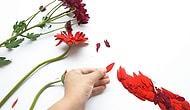 Çiçeğin Değdiği Her Şeyin Daha Güzel Olduğunun 12 Kanıtı