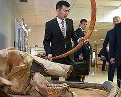 Putin, 28 Bin Yaşındaki Mamut'un Klonlanmasını İstedi