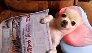 Sevimli Köpeğin Gazete ve Masaj Keyfi