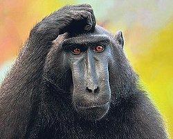 Maymun, Çaldığı Paraları Halka Dağıttı