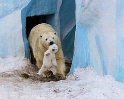 Hayvanlar Aleminden 25 Olağanüstü Tatlı Ebeveynlik Hikayesi