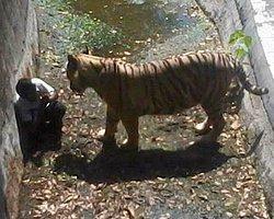 Hayvanat Bahçesinde Kaplan Çocuğu Parçaladı
