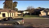 Sadece Avustralya'da Görebileceğiniz Sokak Kavgası! 10 Dakika Yumruklaşan Kangurular