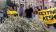 Zeytin Ağaçları Hukuksuz Kesilen Yırcalılar: 'Evlatlarımız Kesiliyor'