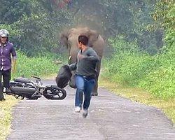 Fil motosikletli gençleri böyle kovaladı