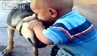 Kendisini Isıran Köpeğin Kulağını Koparan Bebek