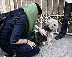İran'da Köpek Besleyenlere Kırbaç Cezası Teklifi