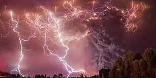 2014'ün En İyi 10 Vahşi Doğa Fotoğrafı