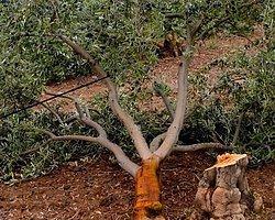 Kolin Grubu'na 6 Bin Ağaç İçin 511 Bin TL Para Cezası Kesildi