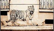 Hayvanları Konu Alan En Güzel 22 Sokak Sanatı
