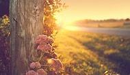 Şimdi Yapmaya Başlayarak Hayatınızı Güzelleştirebileceğiniz 20 Şey