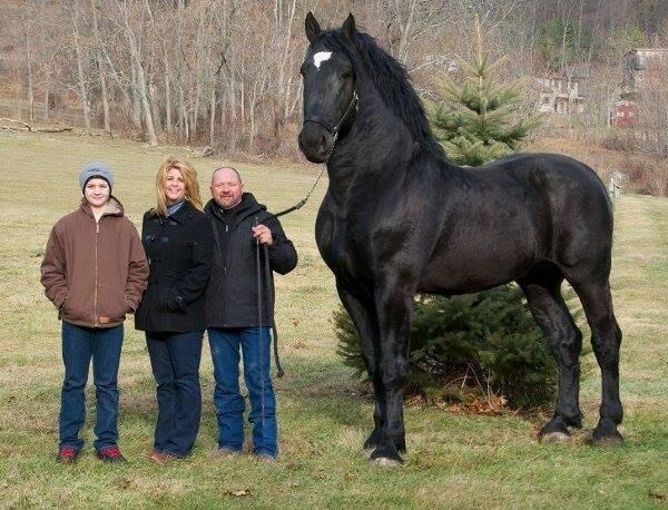 Atlardan Az Biraz Tırsmamız Gerektiğini G 246 Steren 14