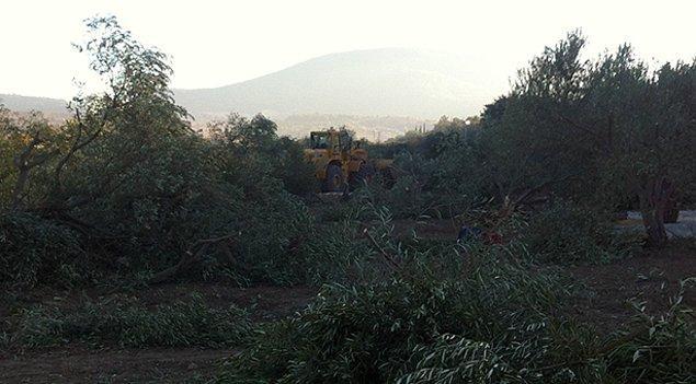 3. Termik santrallerin 3000-5000 zeytin ağacından daha kıymetli olduğunu bilimsel verilerle açıklayın.
