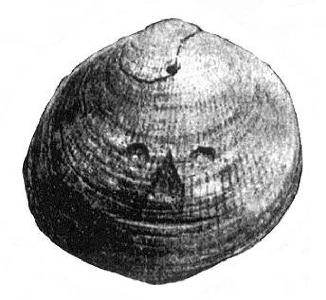 36. İnsan Yüzü Olan Deniz Kabuğu