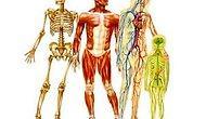İnsan Vücudu Hakkında Hayrete Düşüren 10 Bilgi