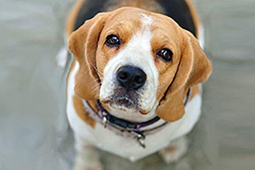 Hangi Tür Köpek Senin Ruh Ikizin Onediocom