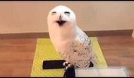 Dünyanın En Mutlu Baykuşu